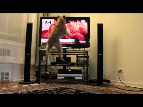 Un perro que ama ver la TV