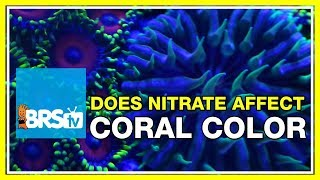 FAQ #33: How do nitrates effect coral coloration in the reef aquarium?