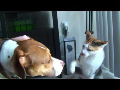 「[ネコ]犬に向けた必殺の連続ねこパンチ。」のイメージ