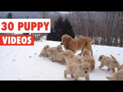 The Cutest Puppy Videos of 2016