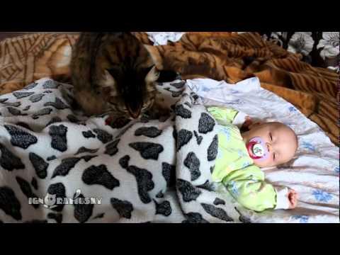 Una gata duerme a un bebé en un abrir y cerrar de ojos