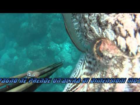Pesca in apnea: 17 Marzo, Full HD