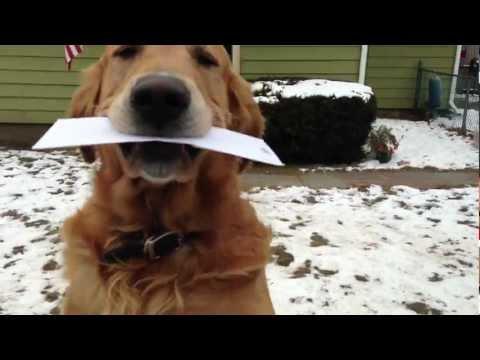 Hund tar emot post av brevbäraren