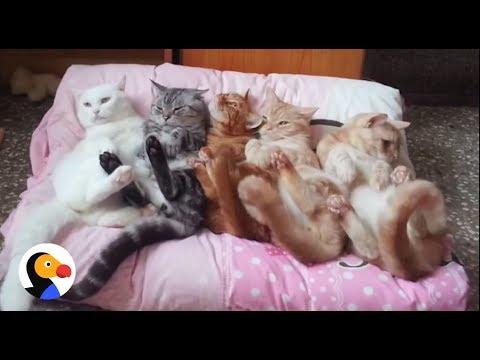 un-lettino-per-5-gatti