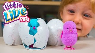 NEW Little Live Pets Surprise Chick Surprise Eggs Toys for Girls Moose Toys Kinder Playtime  Today on Kinder Playtime we are looking at some NEW Moose toys - Little Live Pets Surprise Chicks!  We want to thank Moose Toys for sending us these Little Live Pets Chicks to look at!About Little Live Pets Surprise ChicksIt's time to hatch! Which surprise chick will be inside your egg? With your love and care you will hear your chick tapping and chirping from inside the egg, then when its time your chick will hatch and reveal itself hoping about just like a real chick and making real chick sounds. Your newly hatched chick loves to sing and the more you pet it the more you will hear its happy sounds. Place your chick back inside the egg to relive the amazing hatching moment over and over again.Collect all four including Blossy the Daisy chick, Patty the party chick, Tilly the dancing chick and Beaky the Rainbow chick and keep an eye out for the lucky clucky Limited Edition golden chick!Hatching fast or slow which surprise chick will you get!Hear fun chirping and tapping sounds from inside the eggWatch in amazement as your chick hatchesThe more you pet your chick the more it loves to singCollect all four and watch out for the Limited Edition golden chick!More Kinder Playtime Surprise Toy Openings!HUGE Elena of Avalor Surprise Present Blind Bags Disney Princess Toys for Girls Kinder Playtimehttps://www.youtube.com/watch?v=zdk0LcYagRIHUGE Shopkins Surprise Present Season 7 Surprise Eggs Blind Bags Toys for Girls Kinder Playtimehttps://www.youtube.com/watch?v=r5VlShZf85gHUGE Disney Princess Surprise Present Blind Bags My Little Pony Toys for Girls Kinder Playtimehttps://www.youtube.com/watch?v=HzUnGE-9IRkHUGE Peppa Pig Surprise Present Blind Bags My Little Pony Toys for Girls Kinder Playtimehttps://www.youtube.com/watch?v=hP_MAGJT0qgHUGE Elsa Frozen Surprise Present from Santa Claus Christmas Girl Toys Blind Bags Kinder Playtimehttps://www.youtube.com/watch?v=0YLB6YmQSl4HUGE Christmas Stocking Surprise Toys Shimmer and Shine My Little Pony Girls Toys Kinder Playtimehttps://www.youtube.com/watch?v=5VyhTJPAbPsHUGE Surprise Penguin Slide Surprise Eggs Toys for Girls Trolls My Little Pony Kinder Playtimehttps://www.youtube.com/watch?v=-_gzl6LeWlQHUGE Frozen Surprise Bucket Disney Princess Surprise Toys for Girls Hatchimals Kinder Playtimehttps://www.youtube.com/watch?v=I7U6RRUdD0sHUGE Trolls Movie Surprise Car Toy Surprise Eggs Girl Toys Slime Baff Dreamworks Kinder Playtimehttps://www.youtube.com/watch?v=DCwWMPH9daoHUGE Shimmer and Shine Magic Surprise Toy Chest My Little Pony Shopkins Frozen Kinder Playtimehttps://www.youtube.com/watch?v=YoSO3TJ-4AEHUGE FINDING DORY SURPRISE POOL Toy Surprise Eggs Disney Toys Boy Toys Girl Toys Kinder Playtimehttps://www.youtube.com/watch?v=dJV9lkevzgoHuge Mashems & Fashems Surprise Toy Finding Dory Ninja Turtles Batman Paw Patrol MLP Kinder Playtimehttps://www.youtube.com/watch?v=I3nj3BCvjxoHUGE Finding Dory Surprise Box & Toy Bag Elmo Toys Shopkins Blind Bags Disney Toys Kinder Playtimehttps://www.youtube.com/watch?v=W0g7IPl3nHoFrozen Surprise Wagon My Little Pony Shopkins Funko Mystery Blind Bags Disney Toys Kinder Playtimehttps://www.youtube.com/watch?v=q-XhzJxKw2gHUGE Pink Girl Surprise Egg Surprise Toys Bunny Surprise Toy Shopkins My Little Pony Kinder Playtimehttps://www.youtube.com/watch?v=Gq67sl876LEHUGE Neon Star Surprise Toys Suitcase Shopkins Barbie Disney Unicorno Fun Girls Toys Kinder Playtimehttps://www.youtube.com/watch?v=kghBHl6M9toHUGE Frozen Backpack Surprise Toys Disney Princess Elsa Anna Fashems My Little Pony Kinder Playtimehttps://www.youtube.com/watch?v=eLU294A23Cw
