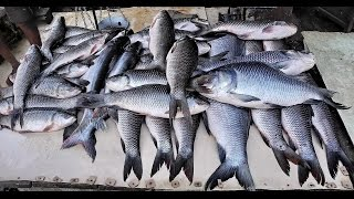 Malvan India  city pictures gallery : Fishing at Chivla beach,Malwan,India
