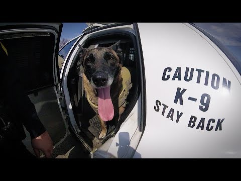 Video thumbnail: Wright State's bomb-sniffing dog hangs up her leash