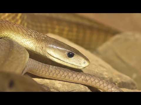 العرب اليوم - شاهد: أكثر 10 حيوانات عدوانية في العالم