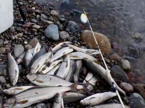 рыбалка в хакасии на черном июсе видео