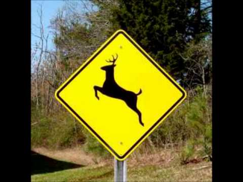 Please Move the Deer Crossing Sign – Hilarious Stupidity!