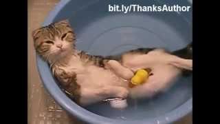 Les Chats Et L'eau !! Humour!!