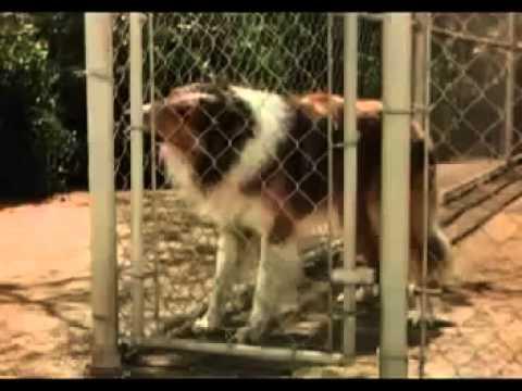 Lassie come home 1943 Elizabeth Taylor