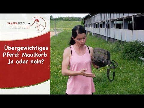 Übergewichtiges Pferd: Maulkorb ja oder nein