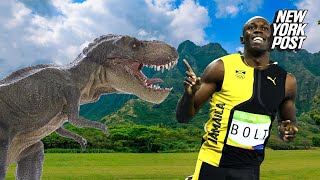 It's often considered one of the scariest beasts to ever walk the Earth, but according to new research, the T-rex might have been slow as a slug. If forced into a race with Usain Bolt, the T-rex wouldn't even come close to winning.