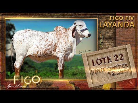 LOTE 22 - FIGO FIV LAYANDA