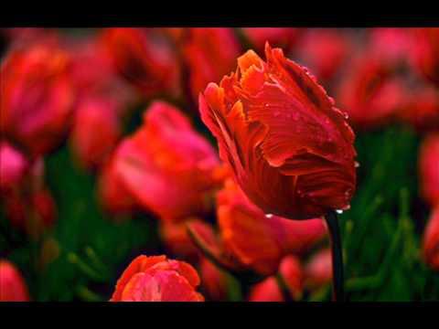 Романтические мелодии любви