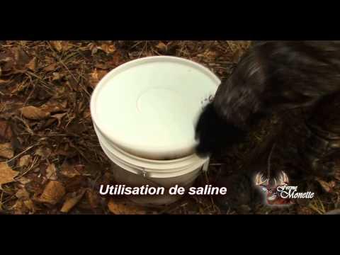 Comment faire une saline pour chevreuil