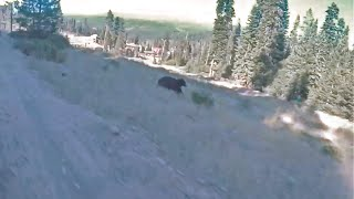 Video OMG... There's a Bear!! (at 4:59) MP3, 3GP, MP4, WEBM, AVI, FLV Agustus 2017