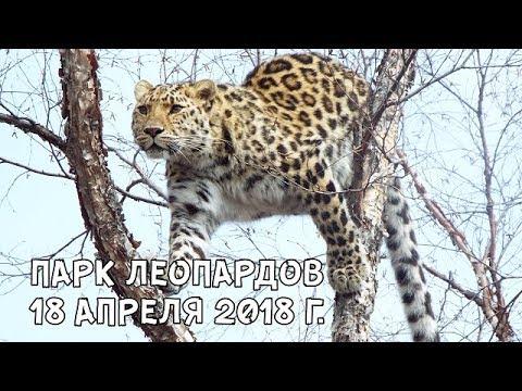 ПАРК ЛЕОПАРДОВ 18 АПРЕЛЯ 2018 Г. - DomaVideo.Ru