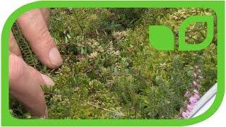 Torfabbau: Versuche mit Bulttorfmoose Teil 12