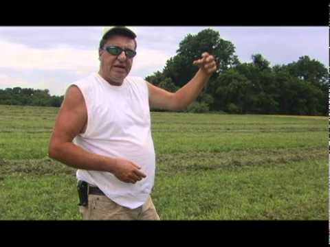 GE Alfalfa - genetically engineered grass is upon us