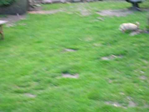 hupelend konijn