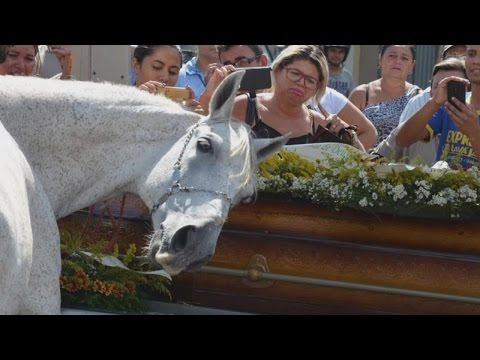 Horse Lays His Head On Coffin As He Mourns The Loss Of His Human Best Friend (видео)