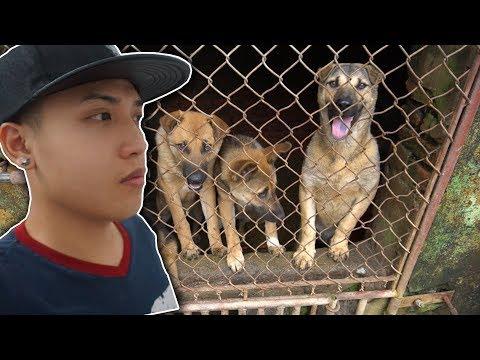 NTN - Cứu Sống Những Chú Chó Khỏi Lò Mổ ( Save the dogs ) (видео)