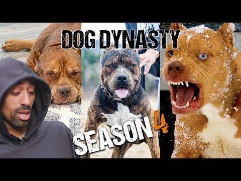 Dog Dynasty: Entire Season 4
