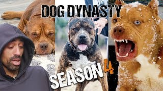 Dog Dynasty: Entire Season 4 by Barcroft Animals