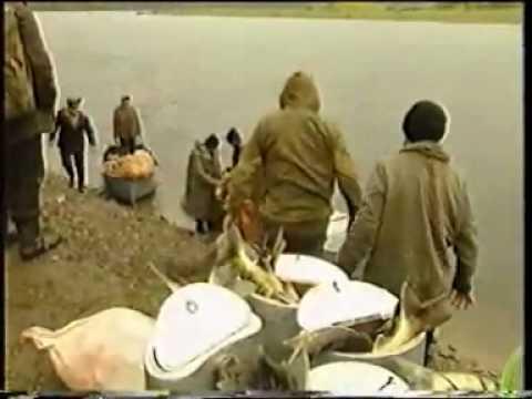 фильм о рыбалке браконьерах