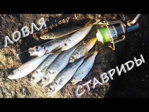 сезоны рыбалки на черном море
