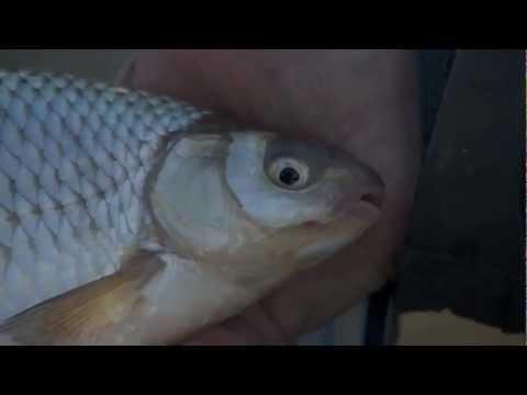 Vraag het aan Ed - feedervissen op de rivier