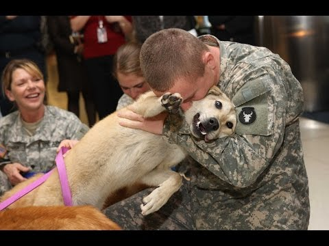 Dogs Welcoming Home Soldiers Complation 2013 [NEW HD]