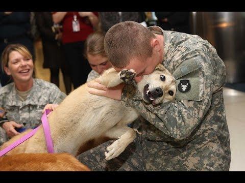 emozionanti incontri fra cani e padroni. lacrime facili per voi.