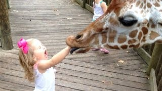 Video FORGET CATS! Funny KIDS vs ZOO ANIMALS are WAY FUNNIER! - TRY NOT TO LAUGH MP3, 3GP, MP4, WEBM, AVI, FLV Juni 2019