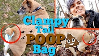 THE ULTIMATE WAY TO WALK YOUR DOG  | Trending-Niche by Tyler Rugge