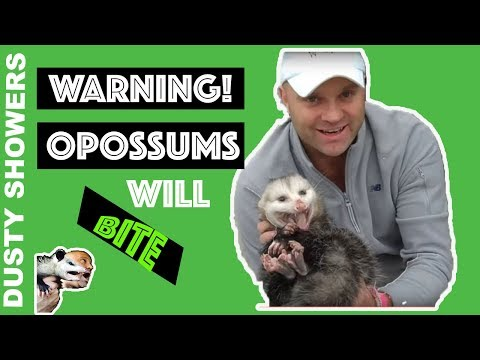 Warning! Opossums WILL Bite, I'm A Professional :)