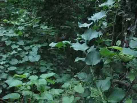 freaky fuckin alien in woods