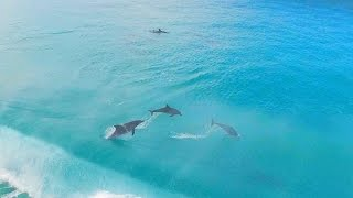 Esperance Australia  city photo : Surfing with Dolphins, Esperance Western Australia