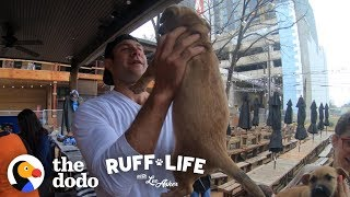 Come Check Out this Extreme Dog Dad | Ruff Life With Lee Asher (Series Trailer) by The Dodo