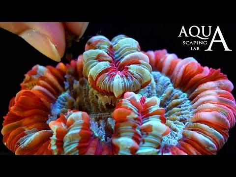 acquariofilia - alimentazione e mantenimento dei coralli