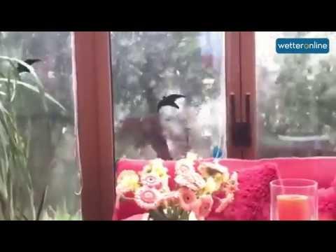 FАВIЕNNЕ bringт gеwаlтigеn Sтurм (24.09.2018) - DomaVideo.Ru