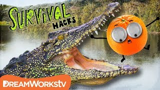 """SITUATION: there's something in the water, and before you can react you're in the middle of an ALLIGATOR CONFRONTATION!Join host Grizzly Griddles as he bushwhacks and hacks his way through the DEADLIEST survival scenarios on Earth!→ Credits ←Alex Hoffman as """"Grizzly Griddles""""Directed & Produced by: Matt LevyWritten by: Alex HoffmanLead Compositor, VFX & Editor: Evan BentzLead Character Animator: Matt SchneckIllustrations by: Rachael PopeCreated by Matt Levy & Alex HoffmanPost Supervisor: Drew HamiltonAssistant Editor: Tim ConroyExecutive Producers: Birk Rawlings & Judy MeyersFollow DreamWorksTV! instagram - https://instagram.com/dreamworkstv/twitter - https://twitter.com/dreamworkstvfacebook - https://www.facebook.com/dreamworkstvJoin the fun on DreamWorksTV where you can find an endless supply of laugh-out-loud jokes, lovable characters, life hacks, music, magic, gaming and more! Get crafty with our DIY hacks, sing along to today's catchiest songs, surprise your friends with clever magic tricks, and learn all the best video game tips and tricks. DreamWorksTV has it all, made just for kids! Check back daily for new episodes and don't forget to follow us on Facebook and Instagram. → Watch Something New! ← http://bit.ly/1L3zRrF→ SUBSCRIBE TO DreamWorksTV! ← http://bit.ly/1kulRcU"""