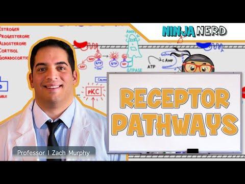 Endocrinology   Receptor Pathways