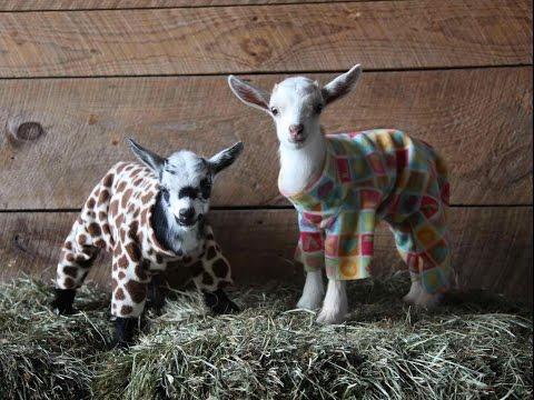 Kilit sai pyjamat päälleen – Suloisia veijareita!