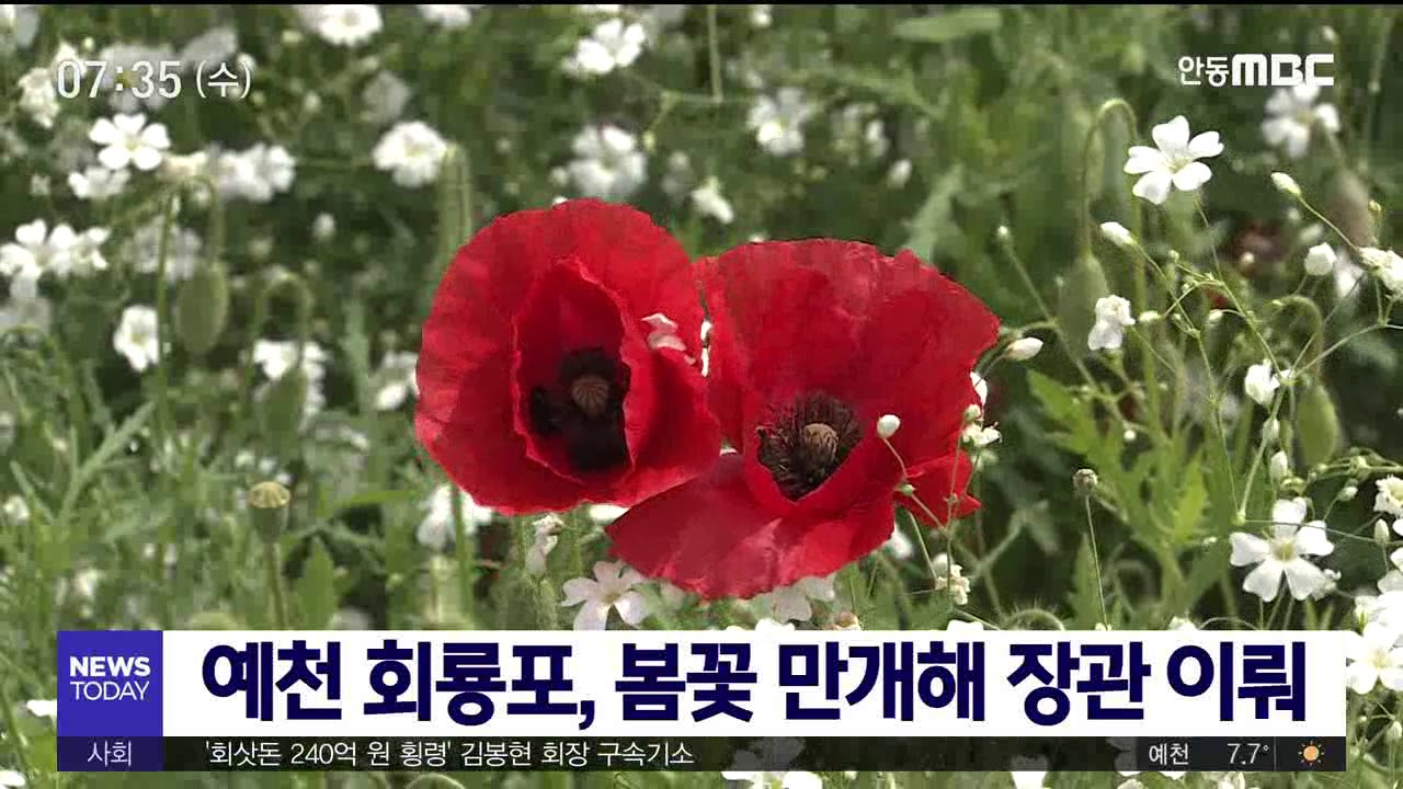 예천 회룡포, 봄꽃으로 장관 이뤄