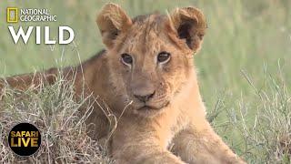 Safari Live - Day 306   Nat Geo Wild by Nat Geo WILD