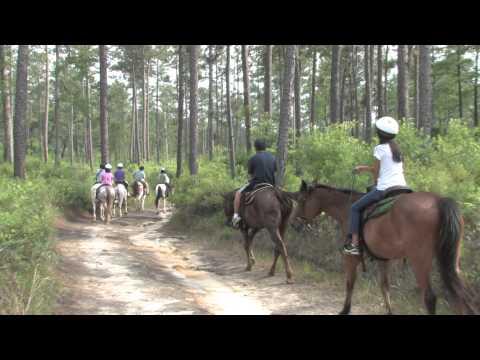 Pensacola Horseback riding 2014