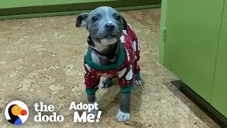 This Pittie Is So Special And She NEEDS A Loving Family | The Dodo Adopt Me! by The Dodo